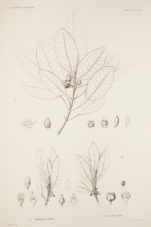 Botany, Pl. 33,  Image number:sil19-23-077b