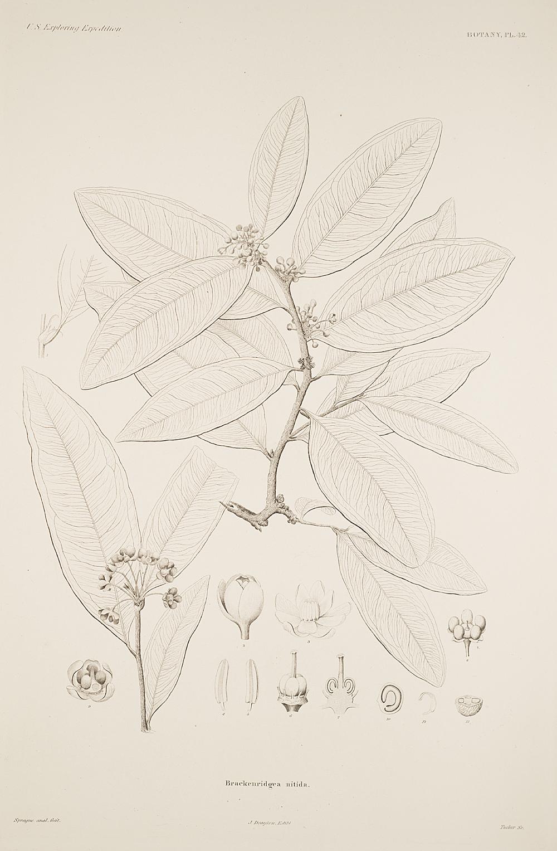 Botany, Pl. 42,  Image number:sil19-23-095b