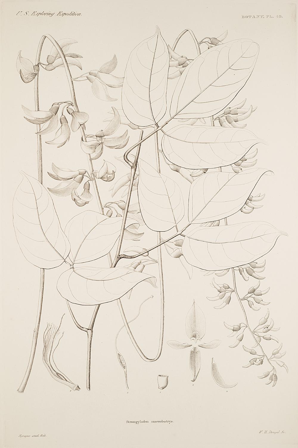 Botany, Pl. 49,  Image number:sil19-23-109b