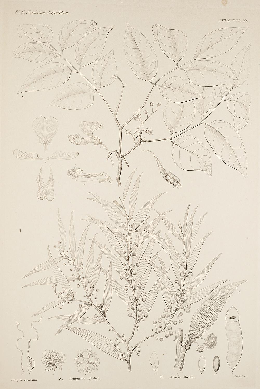 Botany, Pl. 53,  Image number:sil19-23-117b
