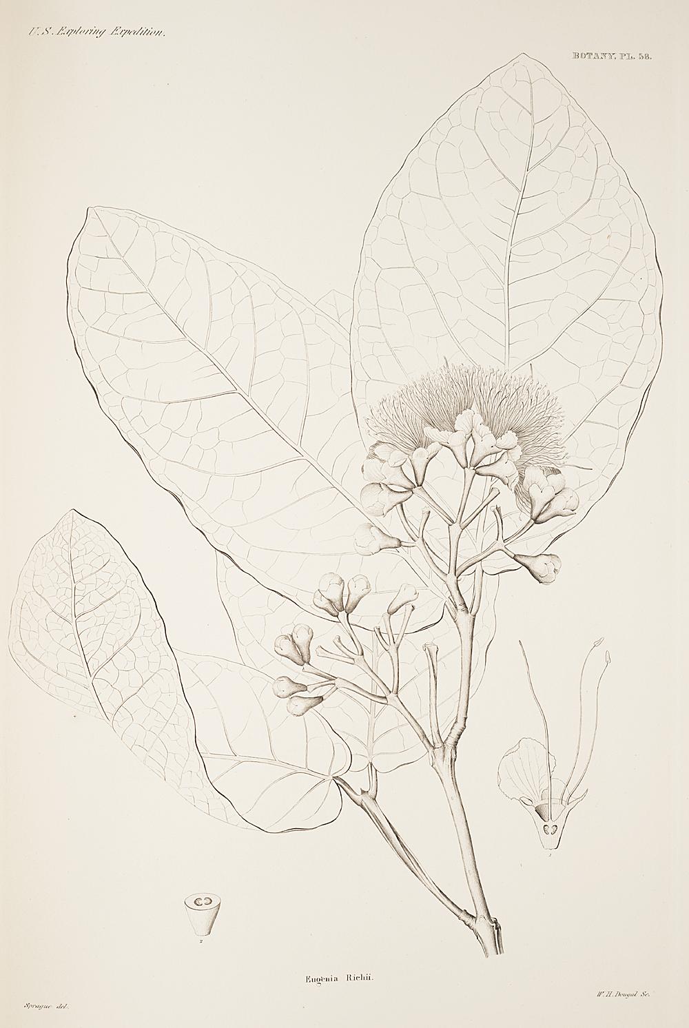 Botany, Pl. 58,  Image number:sil19-23-127b