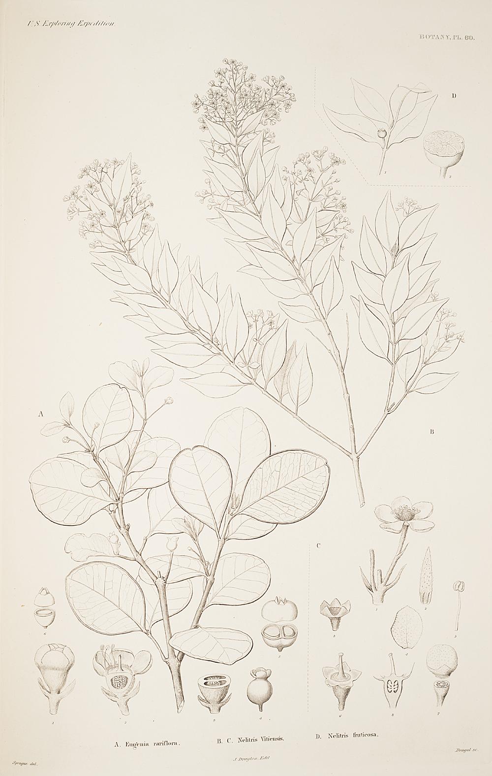 Botany, Pl. 60,  Image number:sil19-23-131b