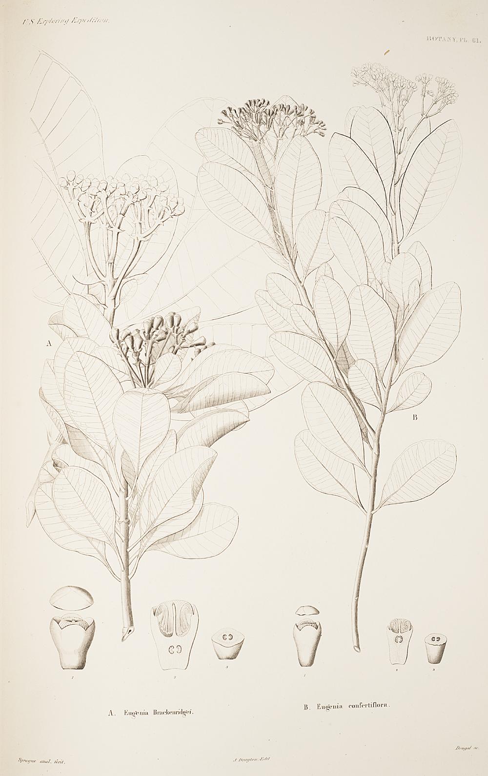 Botany, Pl. 61,  Image number:sil19-23-133b
