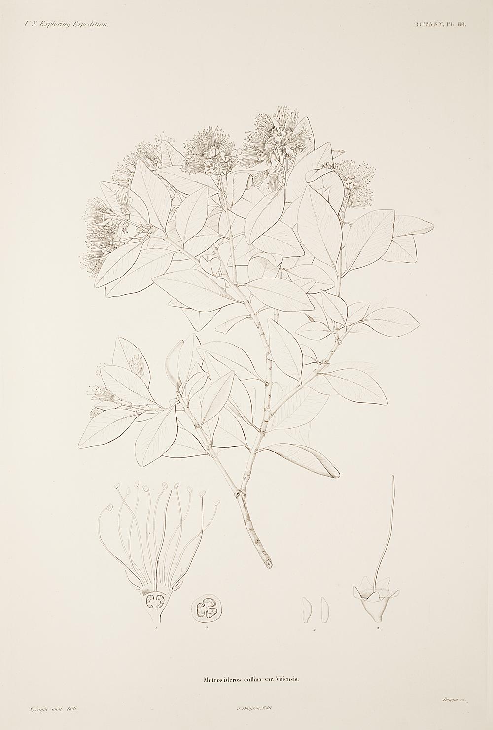 Botany, Pl. 68,  Image number:sil19-23-147b