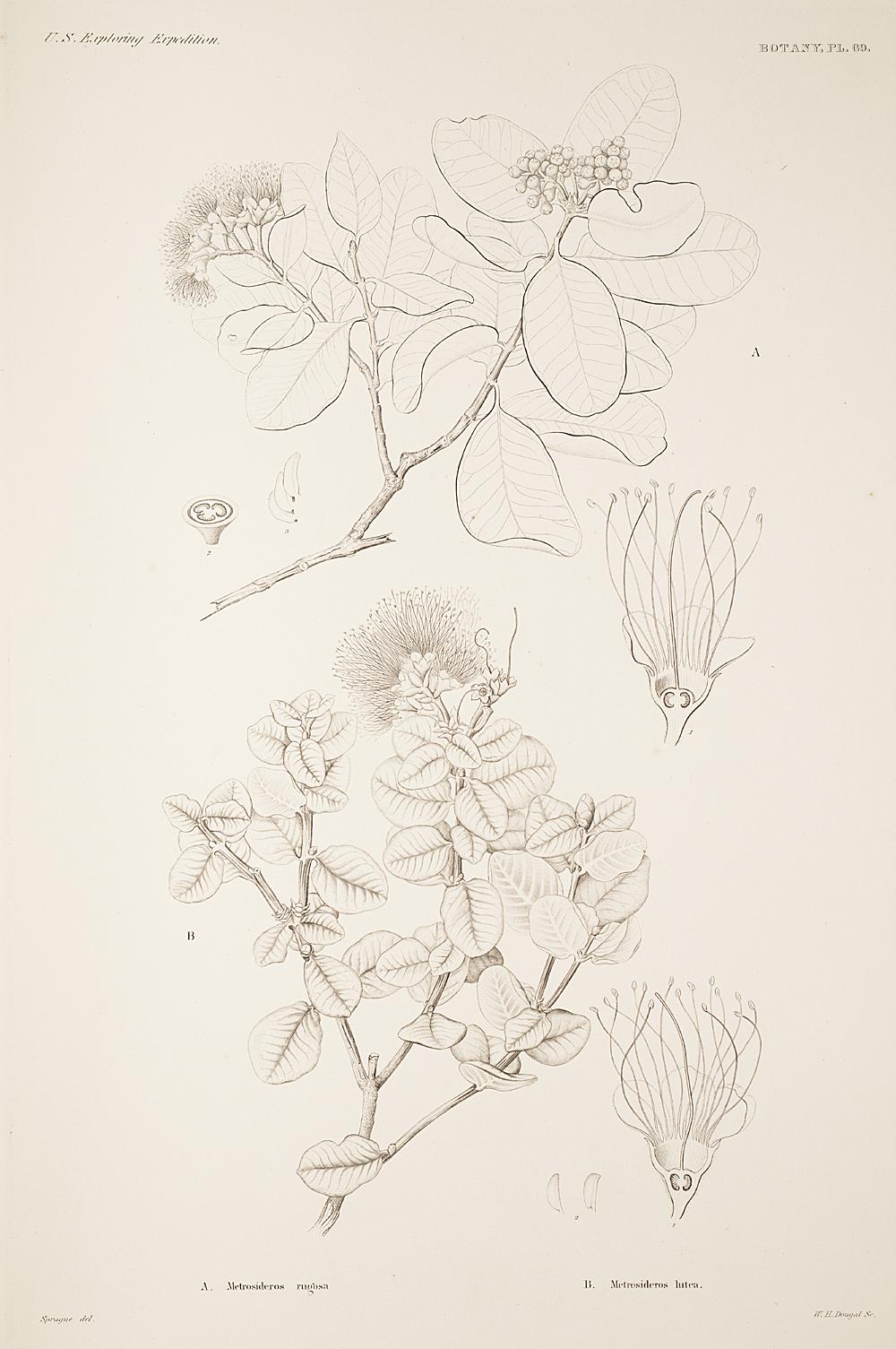 Botany, Pl. 69,  Image number:sil19-23-149b
