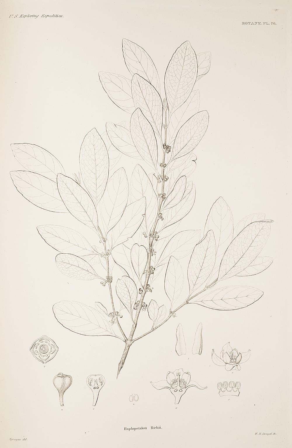 Botany, Pl. 76,  Image number:sil19-23-163b