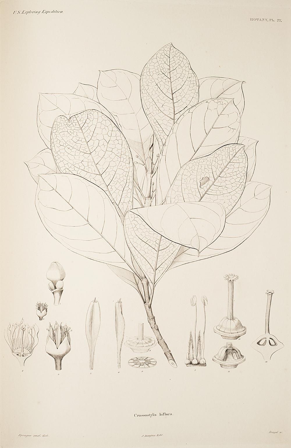Botany, Pl. 77,  Image number:sil19-23-165b