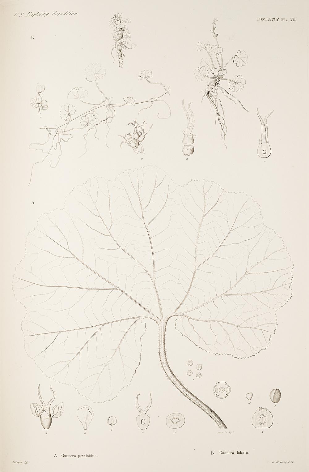 Botany, Pl. 79,  Image number:sil19-23-169b