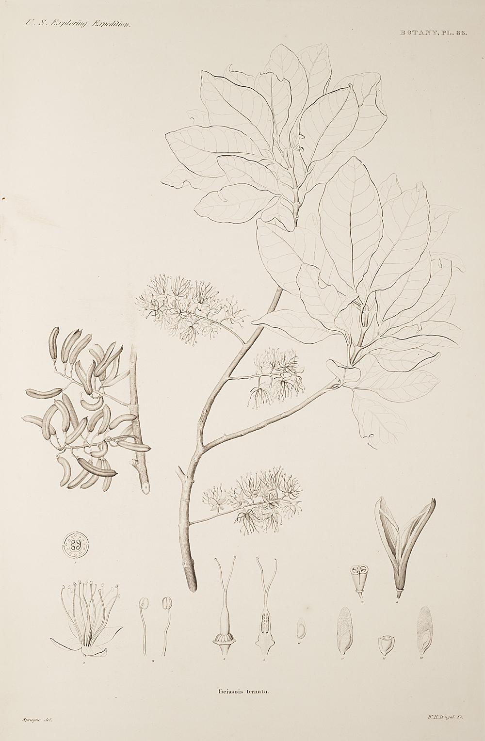 Botany, Pl. 86,  Image number:sil19-23-183b