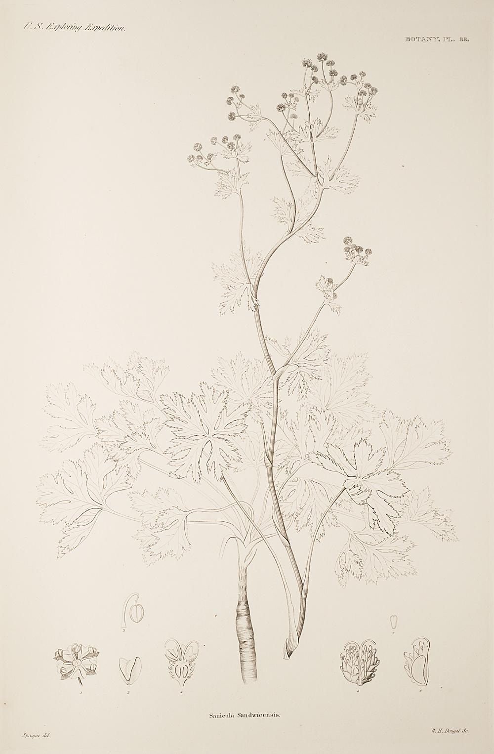 Botany, Pl. 88,  Image number:sil19-23-187b
