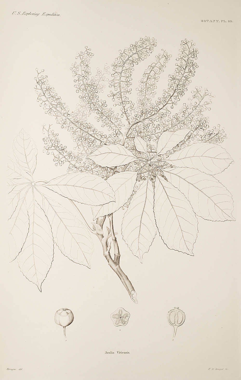 Botany, Pl. 89,  Image number:sil19-23-189b