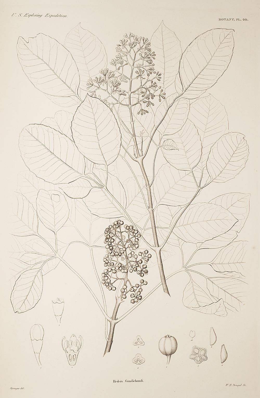 Botany, Pl. 90,  Image number:sil19-23-191b