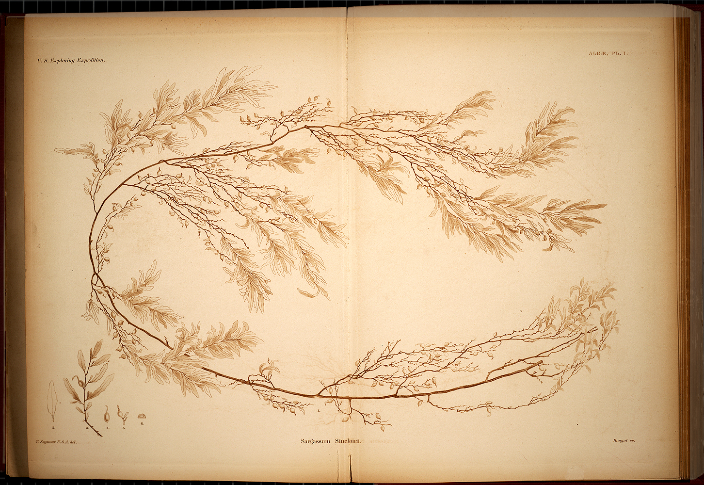 Algae, Plate I,  Image number:SIL19-28-001