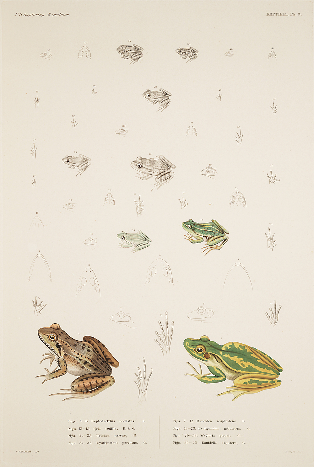 Reptilia, Plate 3,  Image number:sil19-31-025b