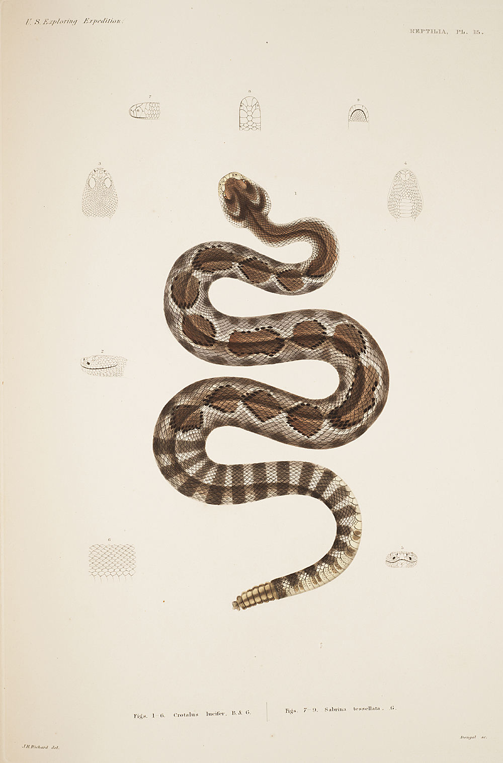 Reptilia, Plate 15,  Image number:sil19-31-049b