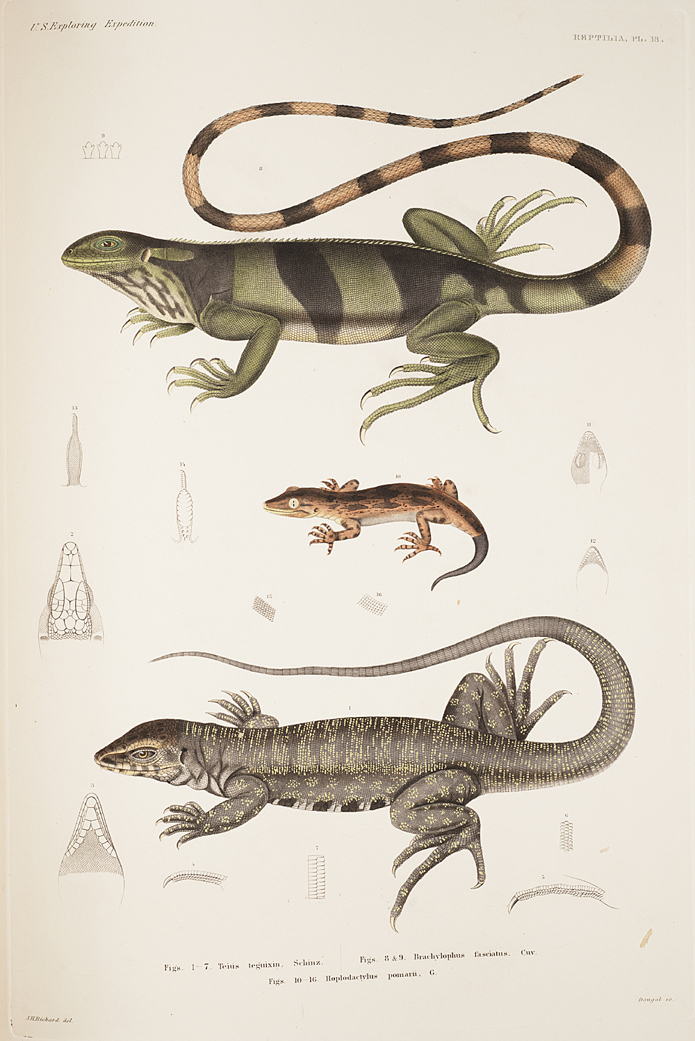 Reptilia, Plate 18,  Image number:sil19-31-055b