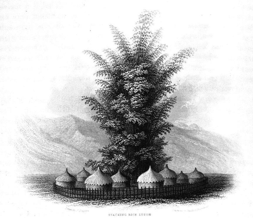 Volume V,  Image number:Sil19-05-345