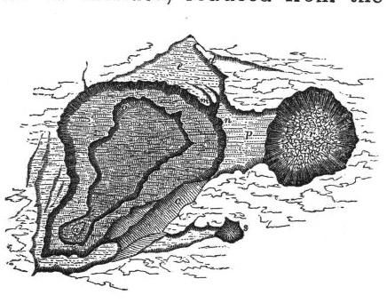 Kilauea,  Image number:Sil19-14-182