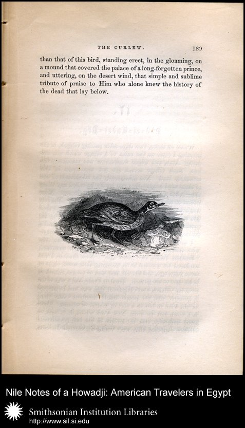 Vignette illustration of a curlew (p. 189),  Image number:sil28-46-04