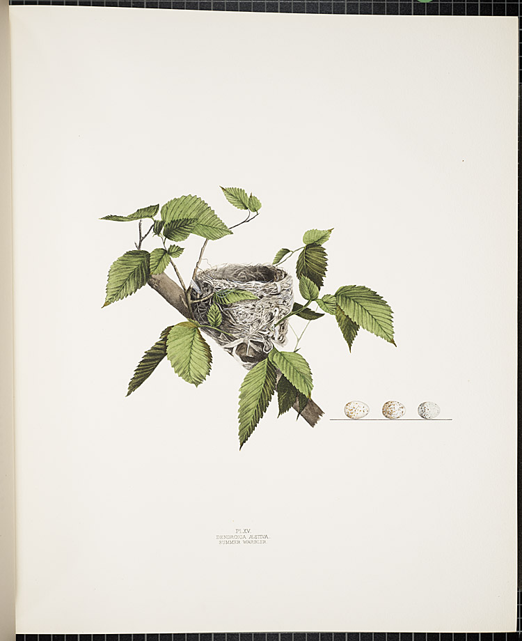 Howard Jones, Illustrations of the nests and eggs of birds of Ohio, 1879-1886, Summer Warbler