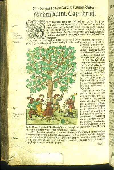 [395 v] ; dancing peasants and bagpiper under Linden Tree,  Image number:99-2752