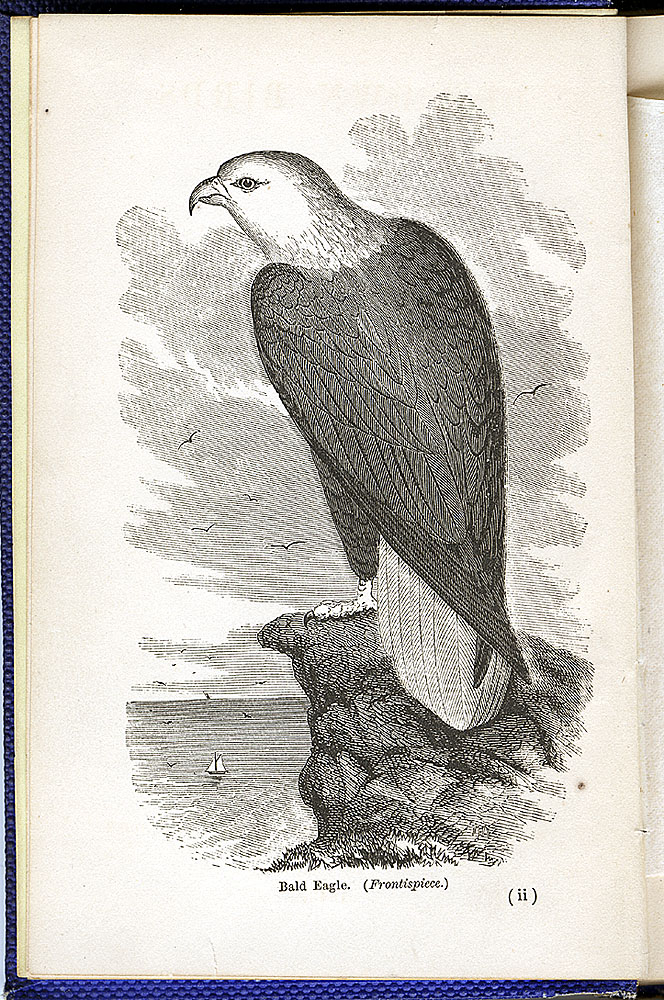 Engraving of the national bird,  Image number:SIL28-111-01