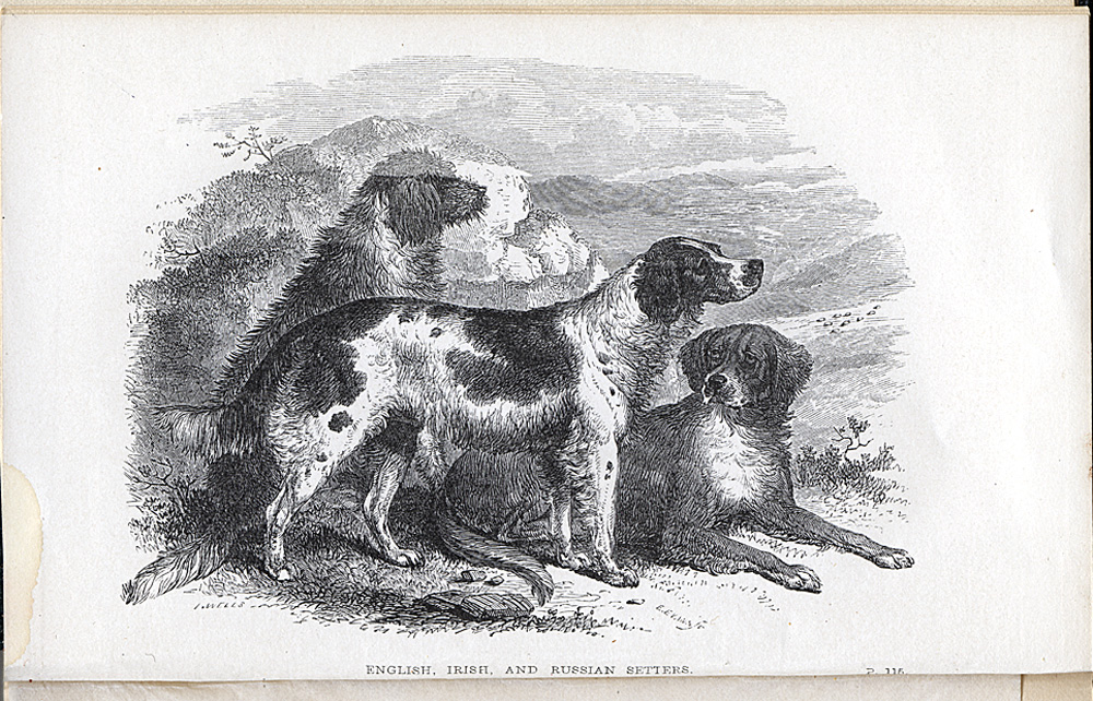 Engraving of dogs used for hunting,  Image number:SIL28-161-01