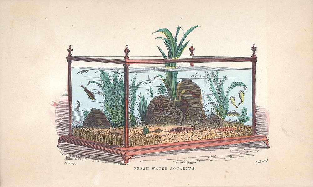 Illustration of a large Victorian fresh water aquarium,  Image number:SIL28-29-01