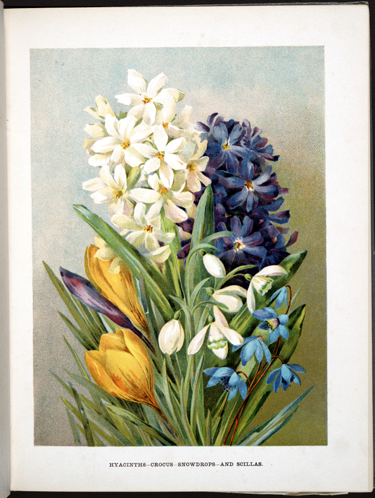 Hyacinths-Crocus-Snowdrops and Scillas,  Image number:SIL33-01-01