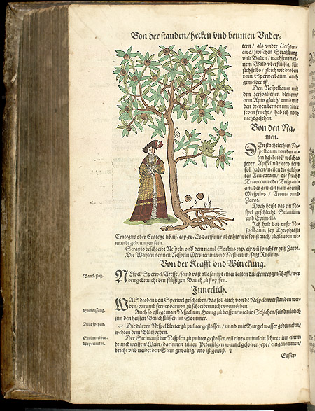 359 verso ; woman under tree,  Image number:SIL7-38-11