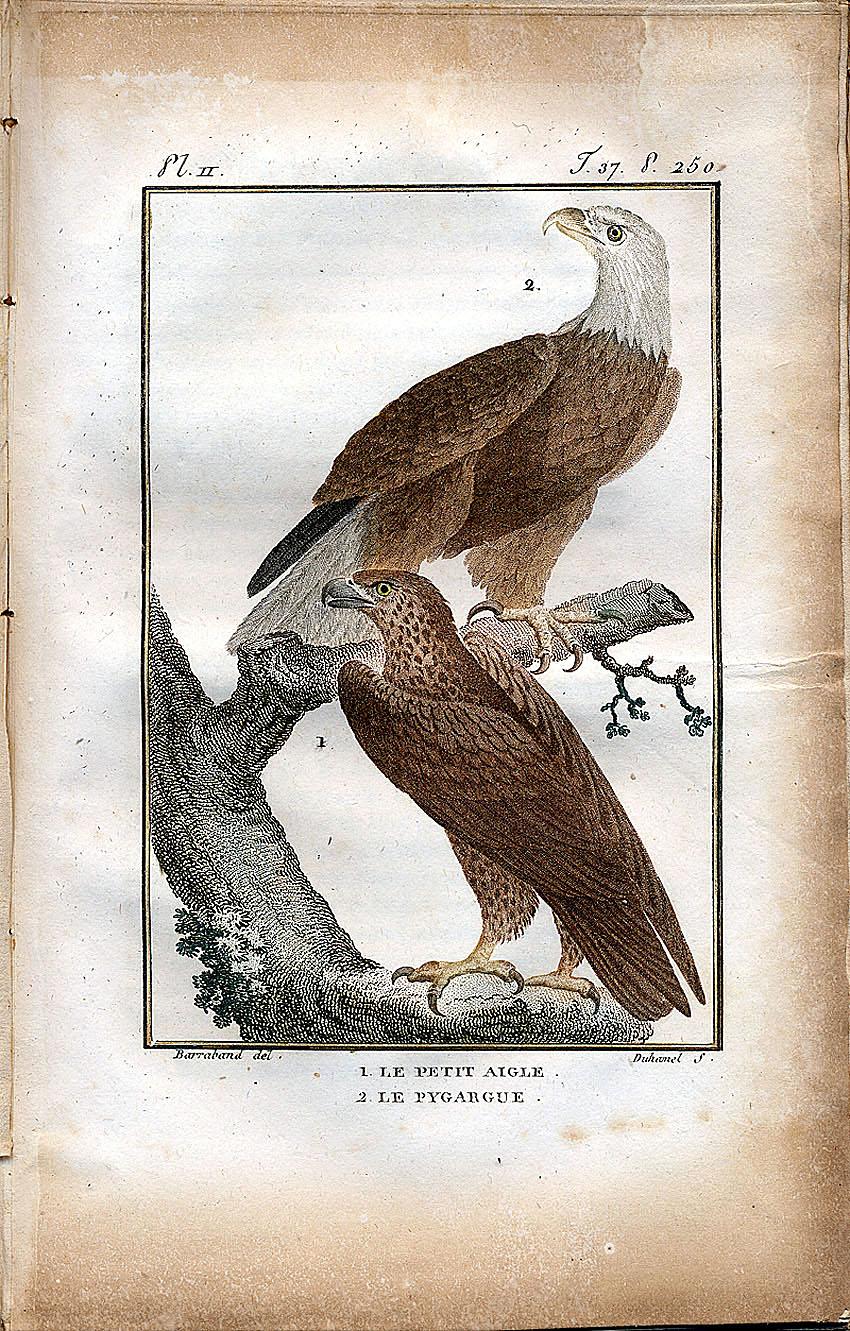 1. Le Petit Aigle. 2. Le Pygargue.,  Image number:SIL-007-505-37-002