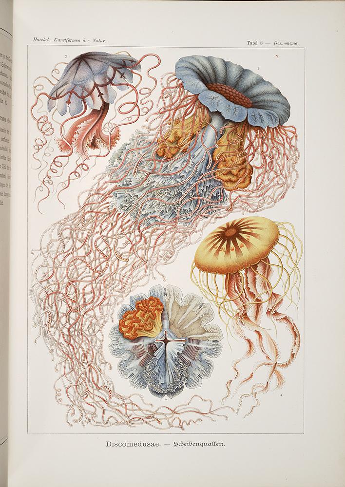 Ernst Heinrich Philipp August Haeckel, Kunstformen der Natur, 1899-1904.