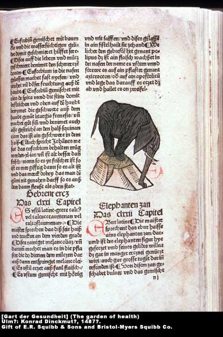 Elephant,  Image number:1-4a-Gartder