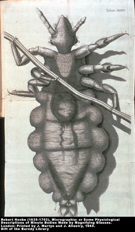 ,  Image number:2-6a-Hooke
