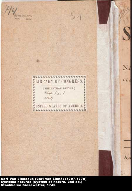 ,  Image number:4-23-Linnaeus