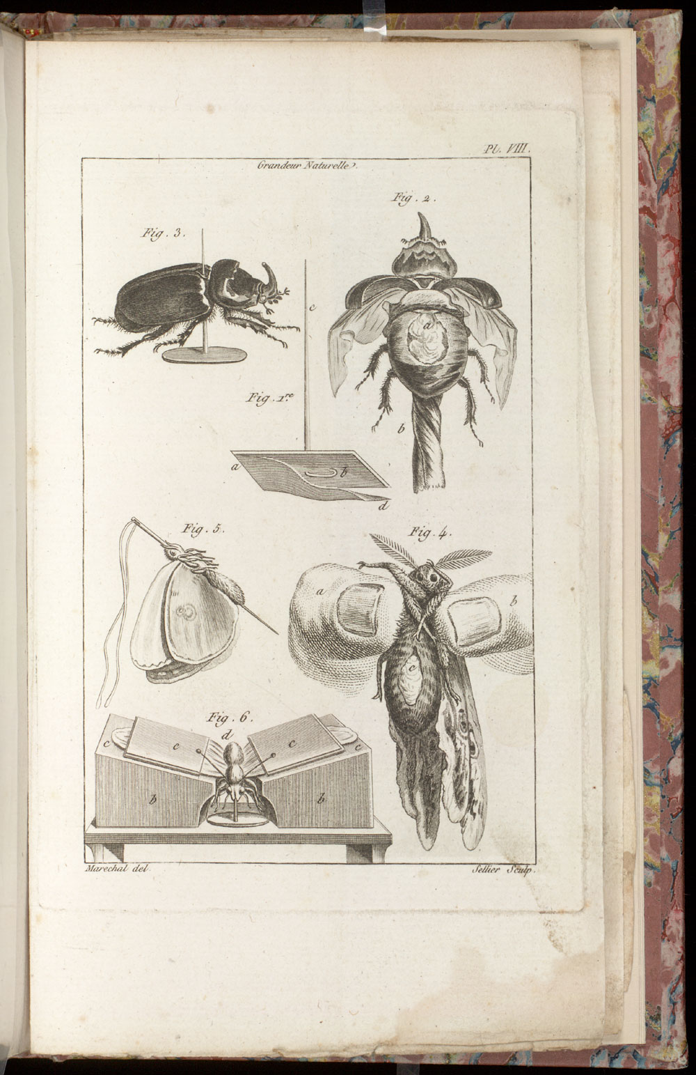 Plate VIII : mounted insects,  Image number:SIL21-10-001