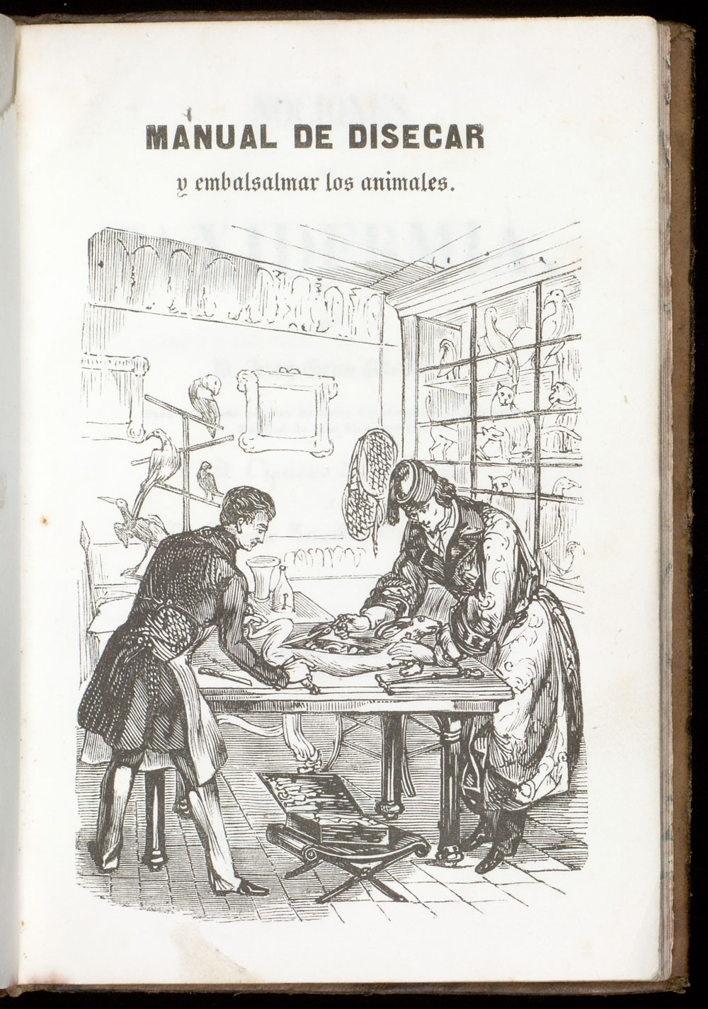 Frontispiece (reversed): Taxidermists at work,  Image number:SIL21-17-001