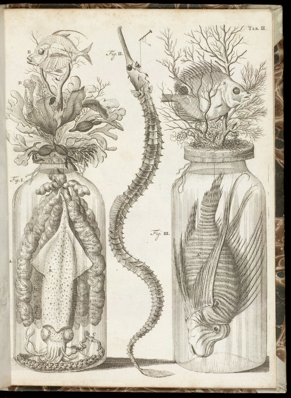 Tab.II: Wet specimens, including fish and mollusk,  Image number:SIL21-20-002