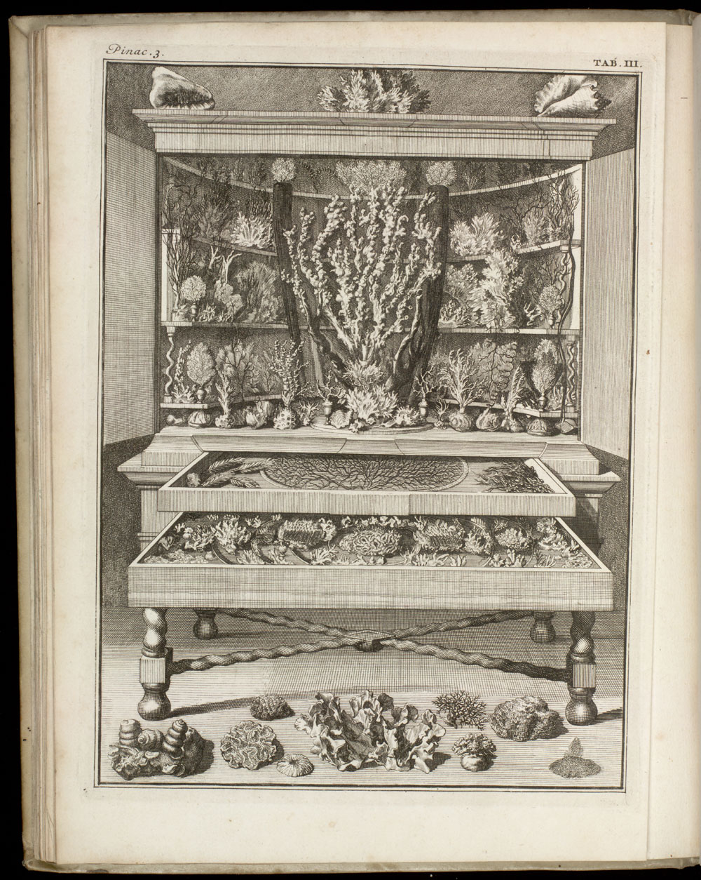 View of the interior of an early museum; showing shellfish and coral in cabinet,  Image number:SIL7-16-04