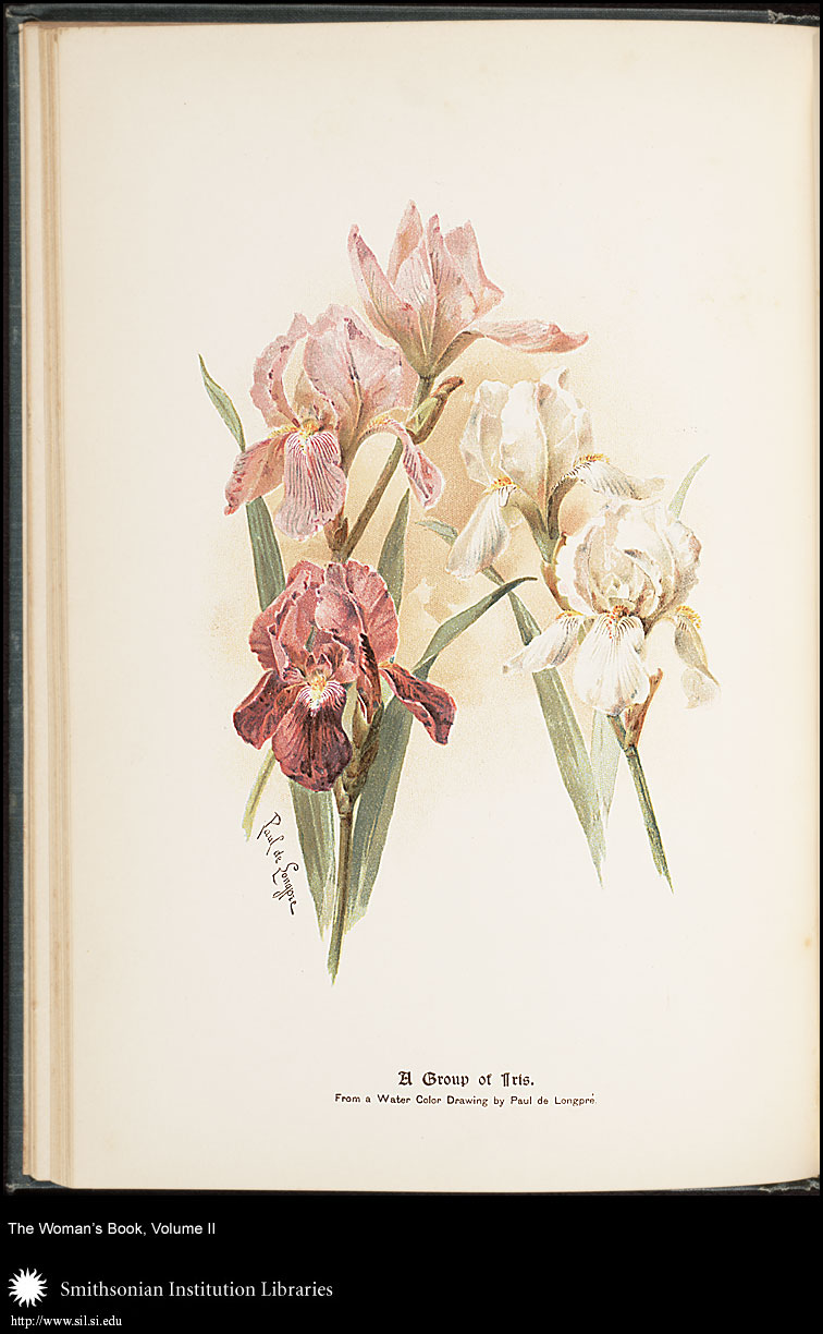 The lady of the house could use this exemplary group of iris as a guide when picking flowers.,  Image number:SIL7-86-02a