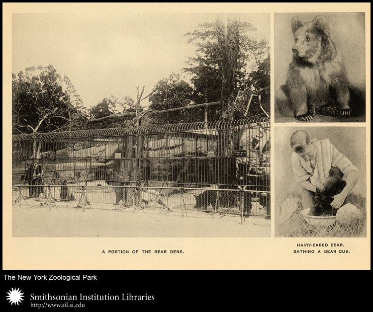 Views of bears and their enclosures,  Image number:sil24-013-02