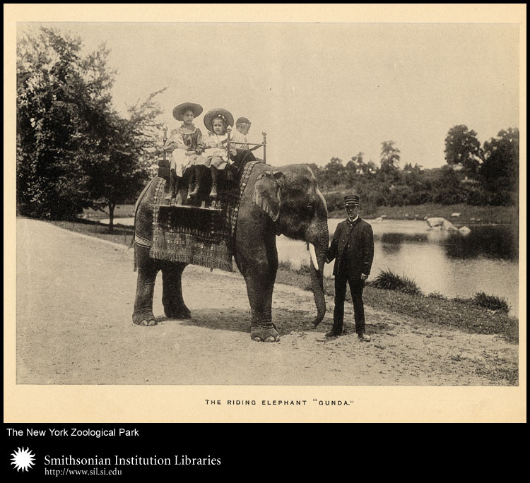 Elephant rides were a popular attraction for children visiting zoos in the early years.,  Image number:sil24-013-03
