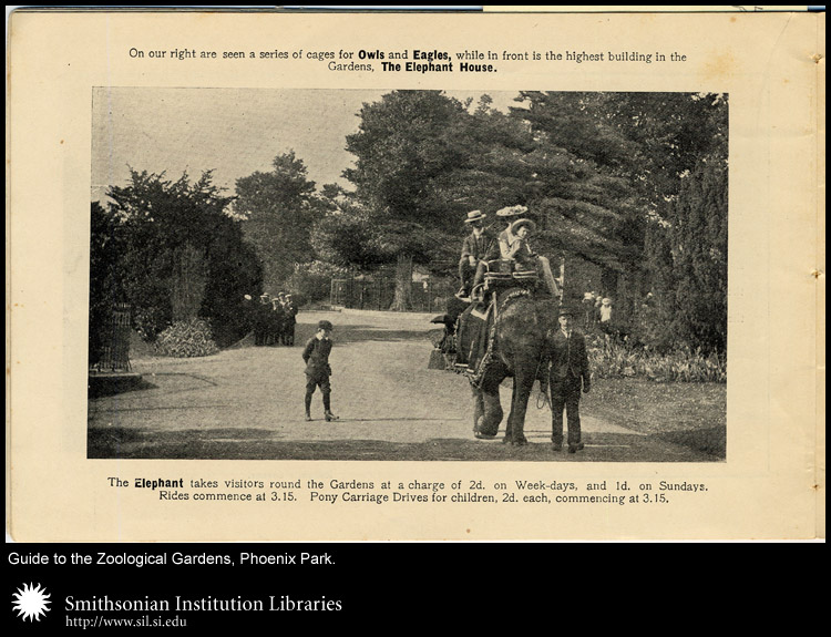 Elephant rides were a popular attraction in many zoos at one time.,  Image number:sil24-030-02