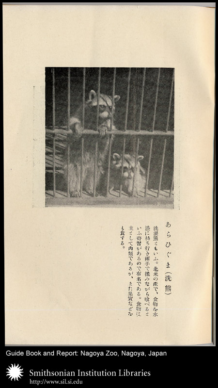 Racoons in cage,  Image number:sil24-040-01