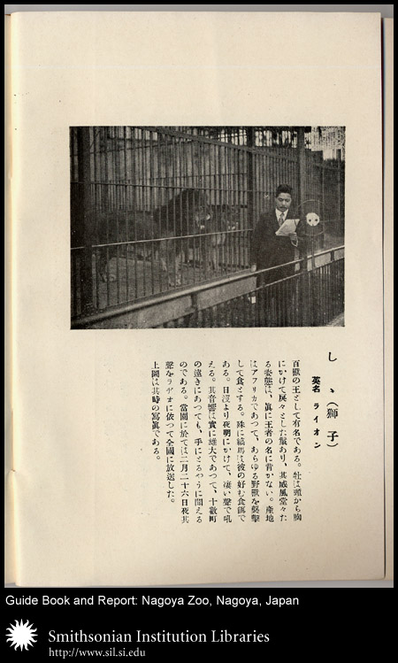 Lions in cage,  Image number:sil24-040-02