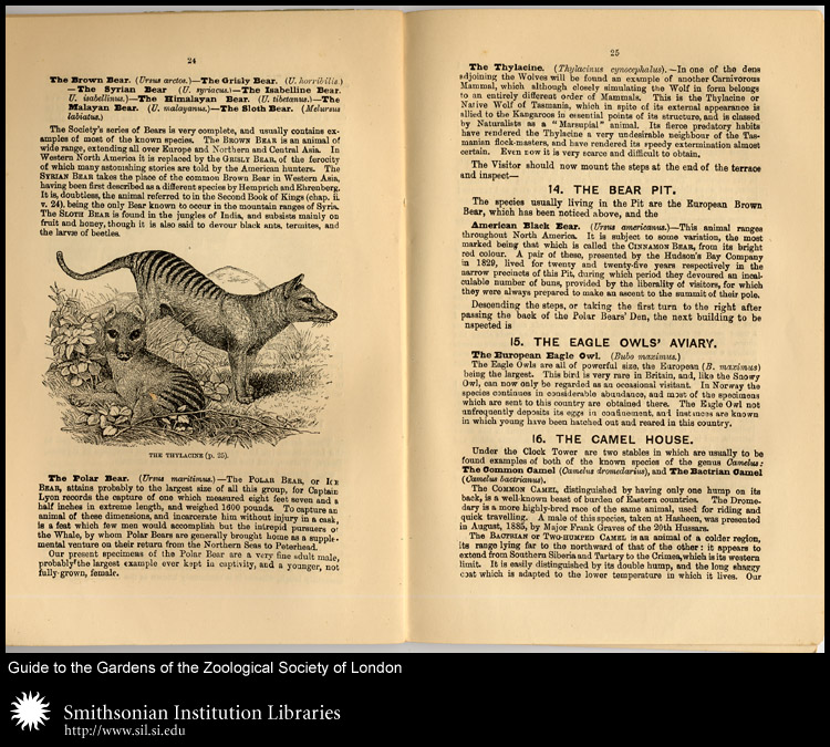 The London Zoo was one of the zoos to have the now-extinct Thylacine.,  Image number:sil24-048-01